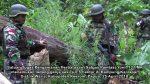 TNI Temukan 0,5 Hektar Ladang Ganja Siap Panen di Papua