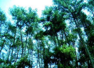 pelestarian hutan