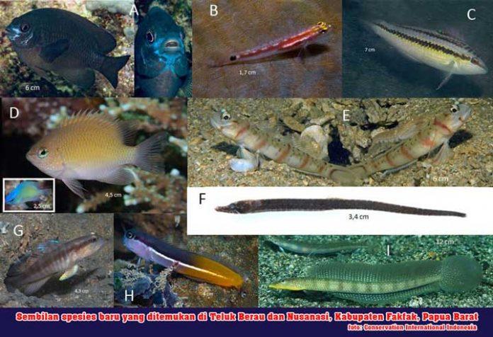 Potensi Penemuan Spesies Baru di Papua Barat Masih Tinggi