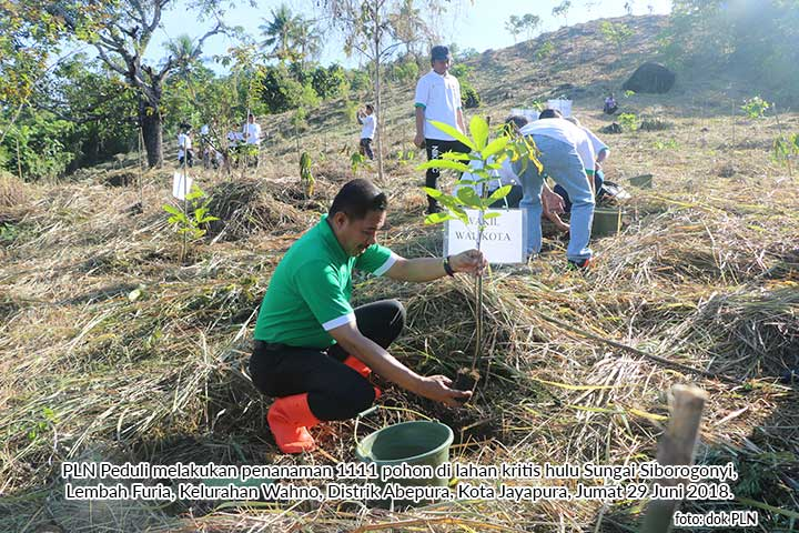 PLN-Pemkot Jayapura Tanam 1111 Pohon