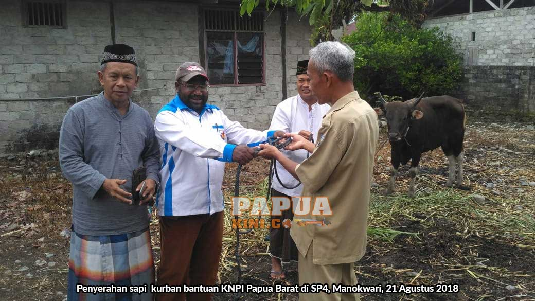 KNPI Papua Barat Sumbang 8 Sapi Kurban