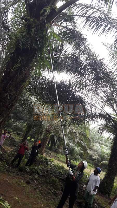 Sudah Kucurkan 750 M, LPEI Harapkan MPHS Bisa Ekspor Langsung Sawit