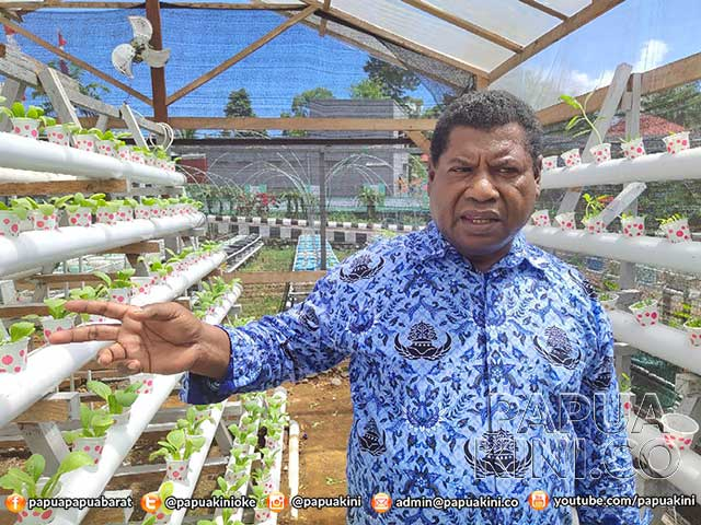 Dinas Ketahanan Pangan Papua Barat Berhasil Terapkan Obor Pangan Lestari