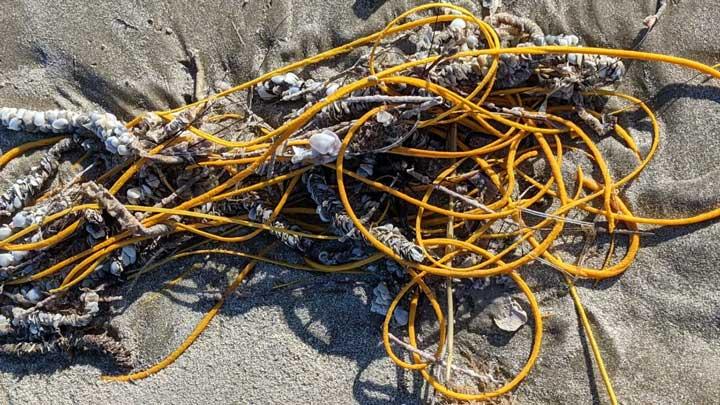Ini Bukan Kabel atau Tali Kusut Tapi Satwa Laut