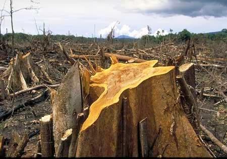 Koalisi Golongan Hutan Imbau Anak Muda Awasi Tata Kelola Hutan dan Lahan Gambut
