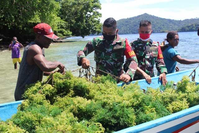 Masyarakat dan Koramil Wasior Panen Perdana Rumput Laut